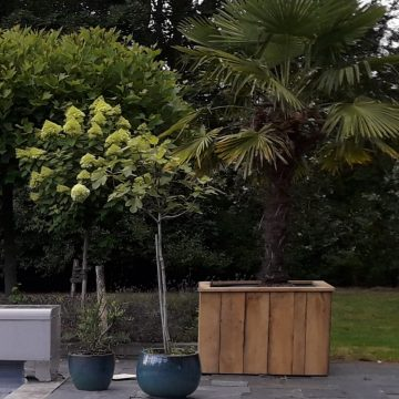Afbeelding Beuckenroode plantenbak
